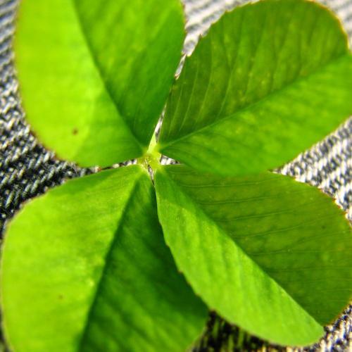 http://www.sxc.hu/photo/834640